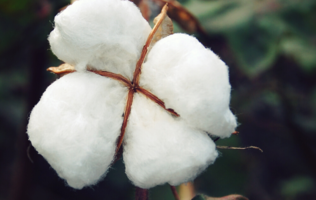 What Is Combed Cotton? Image